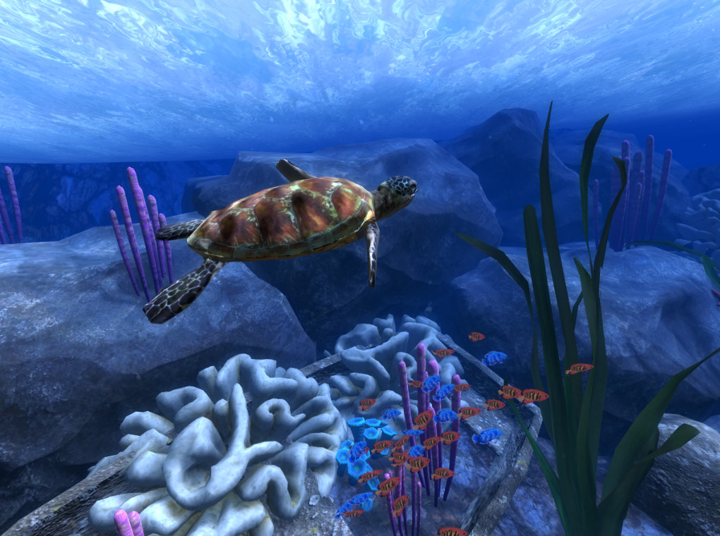 2015-05-08-Ocean-Rift-Sea-Turtles