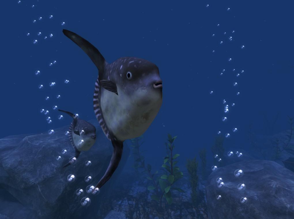 2015-05-08-Ocean-Rift-Sunfish