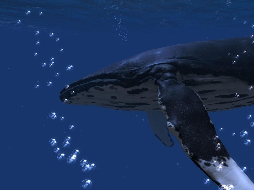 2016-05-08-Ocean-Rift-Humpback-2