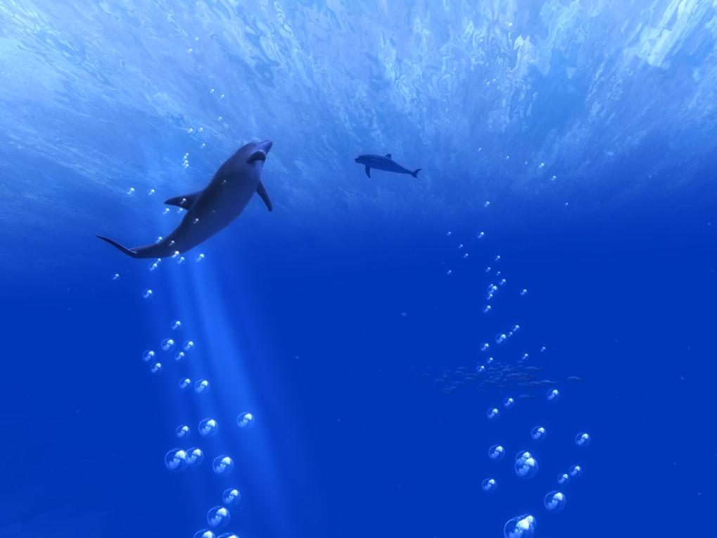 Ocean-Rift-Dolphins
